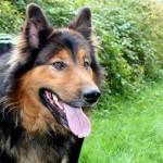 Un'estate in salute per il cane: regole e accortezze