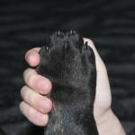 """Un gesto responsabile: adottato Pongo, cane """"pericoloso"""""""