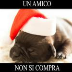 Truffa a Cesiomaggiore: e c'è ancora chi compra cani sul web!