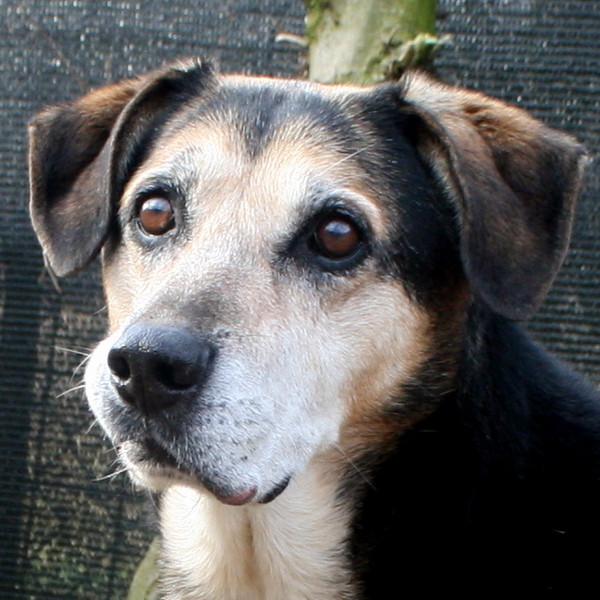 Cane del rifugio ferito a causa dei botti