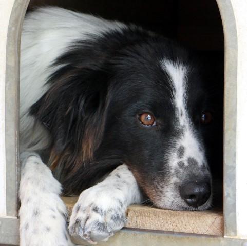 https://www.associazioneapaca.eu/adozioni/i-cani-adottabili/schede-taglia-media/