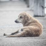 Trasferire cani da Sud a Nord: intervista a Sabrina Cangini