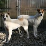 Cure gratis per cani e gatti: è solo una proposta, ma a Roma è già una realtà