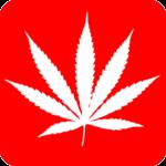 Cannabis e derivati verso la legalizzazione? E il cane?