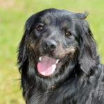 Il protocollo caldo dell'Ulss Dolomiti sembra scritto per i cani…