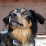 Aumentare il benessere dei cani con la fisioterapia: volontari a lezione