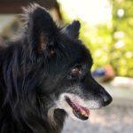 Cani e canili: un po' di numeri per capire problemi e rimedi