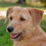 Adottati Suri, Kato, Kiki e Juli: altri quattro cani in famiglia per Natale