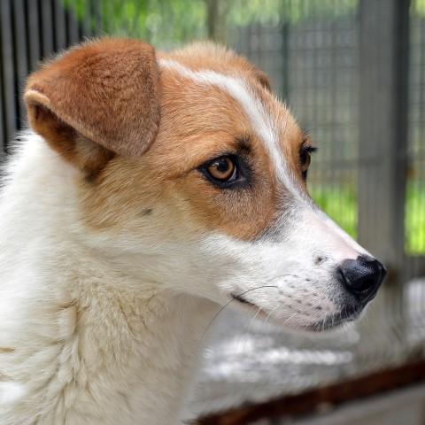 Belluno: è vicino all'approvazione il nuovo Regolamento sul benessere animale