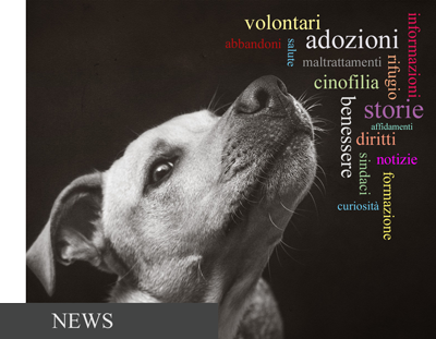 NEWS APACA
