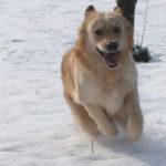 I consigli di LNDC per aver cura di cani e gatti in inverno