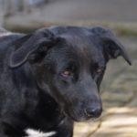 Adottato Nerone, un cane che aveva conosciuto solo una stanza