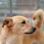 """Cinque cani """"recuperati"""": ora sono (quasi) adottabili"""