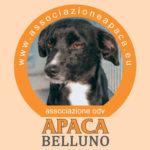 """I cani di APACA """"conquistano"""" il centro storico di Belluno"""