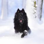 Fa un 'freddo cane': ma cosa c'entra il cane col freddo?