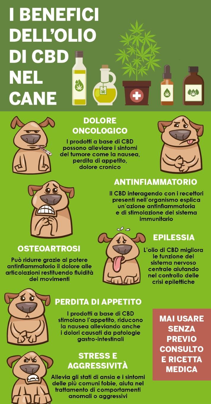 Cannabis Terapeutica Per Cani E Gatti Ora Cè Associazione Apaca