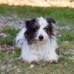 Lilli e Balloo: adottati i primi due cani del clochard