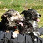 Dieci cani in…pieno recupero