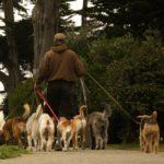 Aperte le pre-iscrizioni per un nuovo corso dog sitter