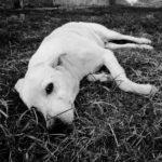 Cani e giardini: non sempre un abbinamento riuscito